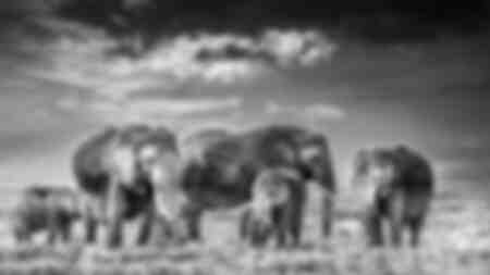 Famiglia di elefanti Amboselli Kenya