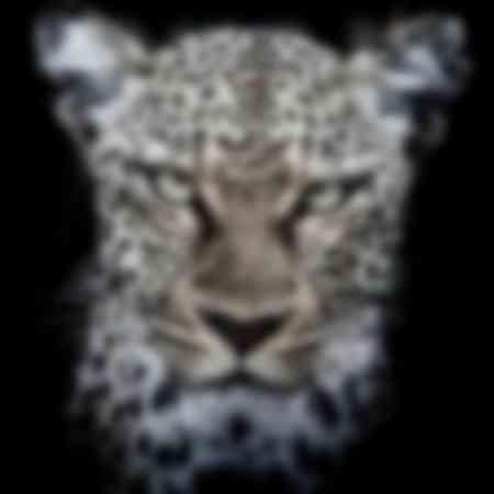 portrait léopard