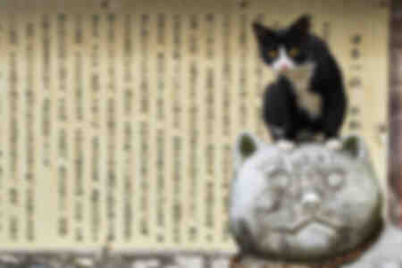 Shrine temple dedicated to cats