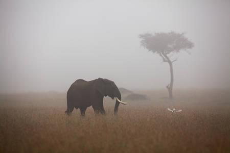 Un jeune éléphant au Masaï Mara