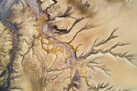 El árbol del río