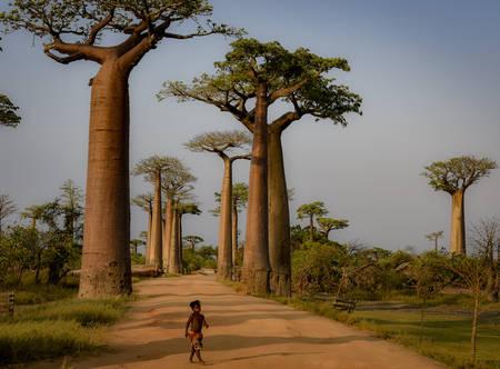 I baobab del Madagascar 02