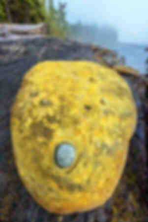 A strange yellow boulder