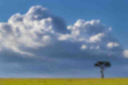Acacia en África