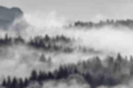 Nebbia nella foresta-Croazia