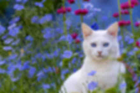 Gatto bianco in un giardino in estate