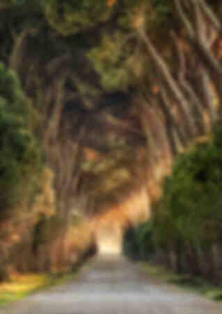 Camino forestal - Toscana