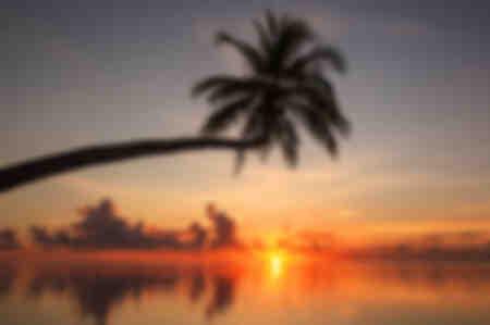 Palme Sonnenuntergang