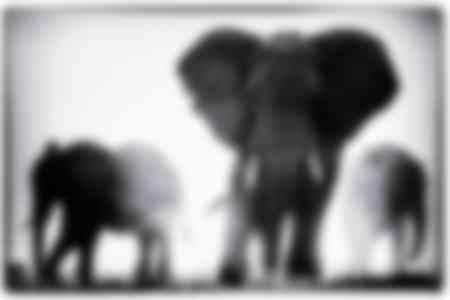 Elefanti nella polvere