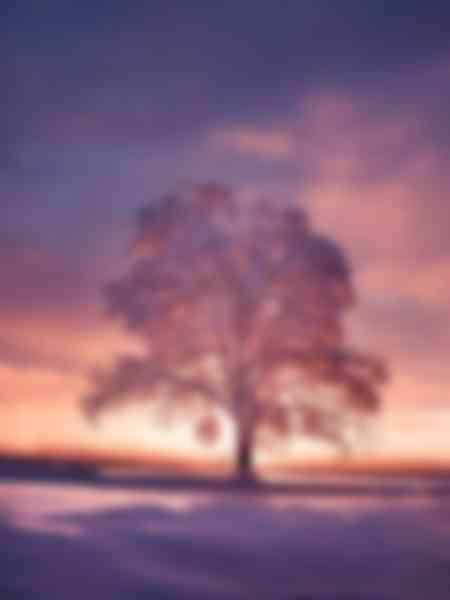 Lever de soleil sur un arbre enneigé