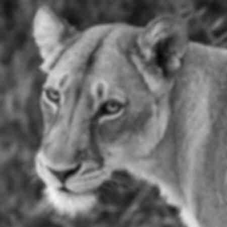 Afrikanskt lejon