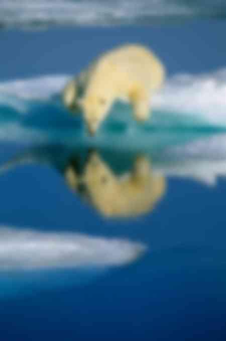 Eisbär auf dem Eisbeutel liegend