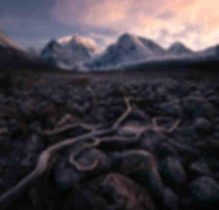 Lyngens roots