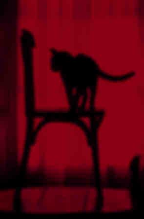 Sagoma di gatto