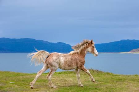 Horse galloping along the sea
