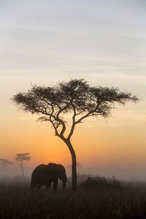 Dans la brume au lever du soleil