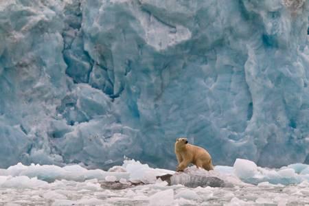 La chasse de l'Ours blanc