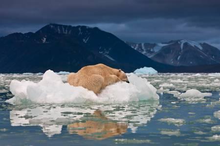 The rest of the Polar Bear
