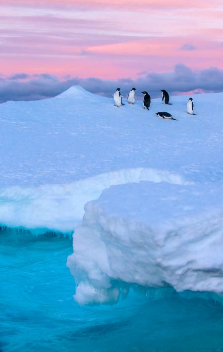 Adélie penguins at dusk