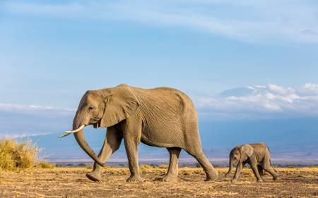 Mount Kilimandjaro et éléphants