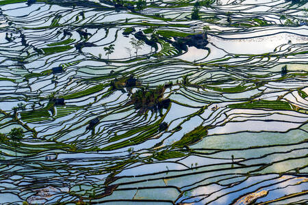 Rice fields of Yuanyang