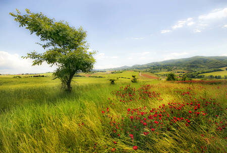 Toscane au printemps