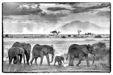 En flock majestätiska elefanter