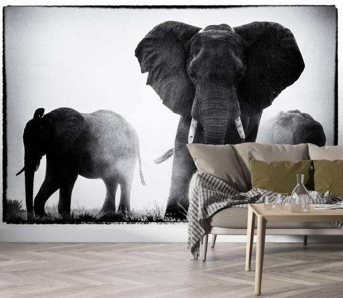 Eléphants dans la poussière