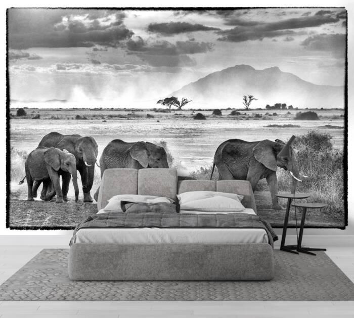 Un troupeau d'éléphants majestueux
