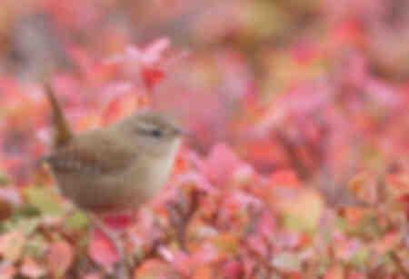 liten fågel på den rosa bakgrunden