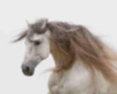 Wit galopperend paard