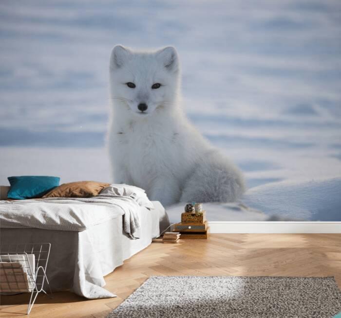Renard polaire assis dans la neige