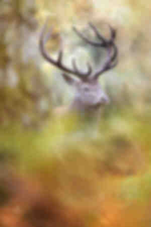 Face to face with a deer