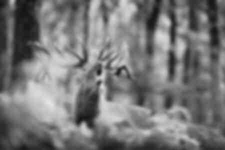 De koning van het bos in de tijd van de plaat
