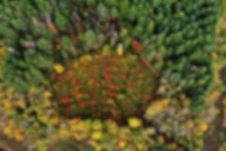 Luchtfoto in het bosmassief van de Morvan met regeneratiekap