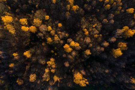 Forêt de Saint Germain en Laye en automne