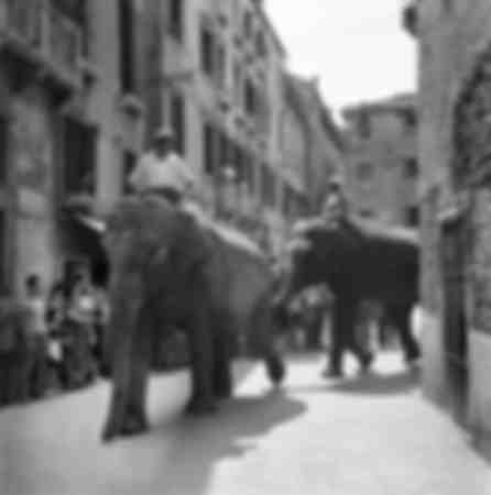 Elephants in Venice 1954