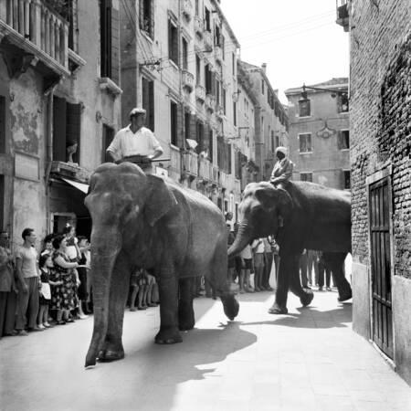 Elephants in Venice 1954
