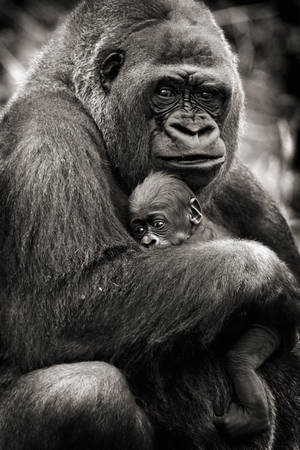 Moederlijke relatie