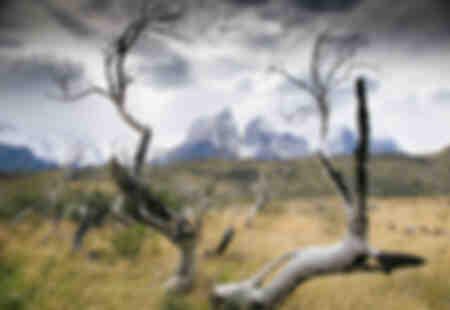 Torres del Paine - Patagonia 11
