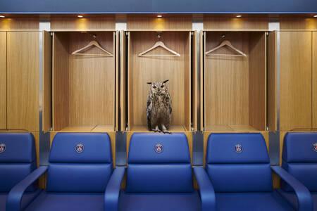 Hibou dans le vestiaire