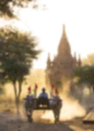 Bullock cart on a dusty track