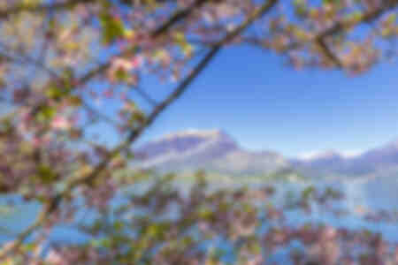 Cerisiers sur le lac de Côme Italie