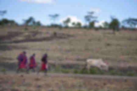 Massai folgen einer Kuh
