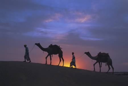 Camels silhouetted against the sunset