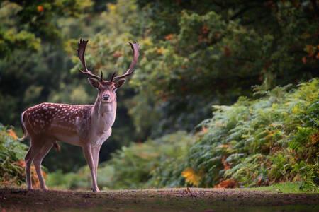 djur i england