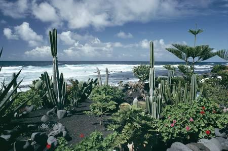 Jardin au bord de l'océan Atlantique