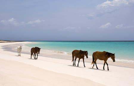 The Bahamas-Pink Sands Beach