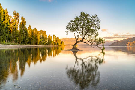 The lone tree in Lake Wanaka in the morning light