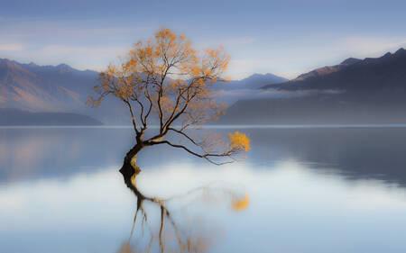 Der Wanaka-Baum